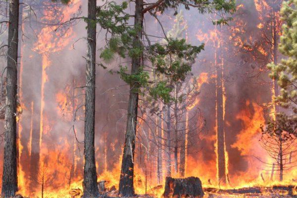 fuego_forestal-600x400