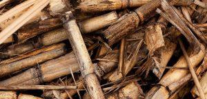 biomasa-300x144