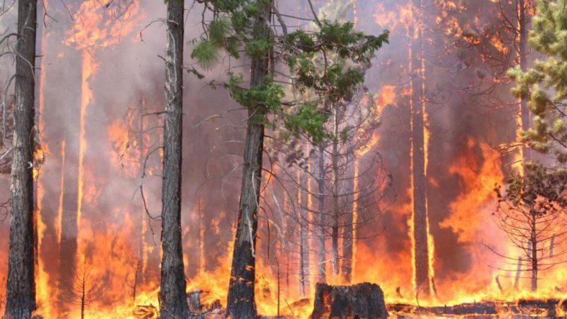 fuego_forestal_1200x575-1-800x450