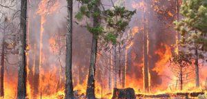 fuego_forestal_1200x575-300x144