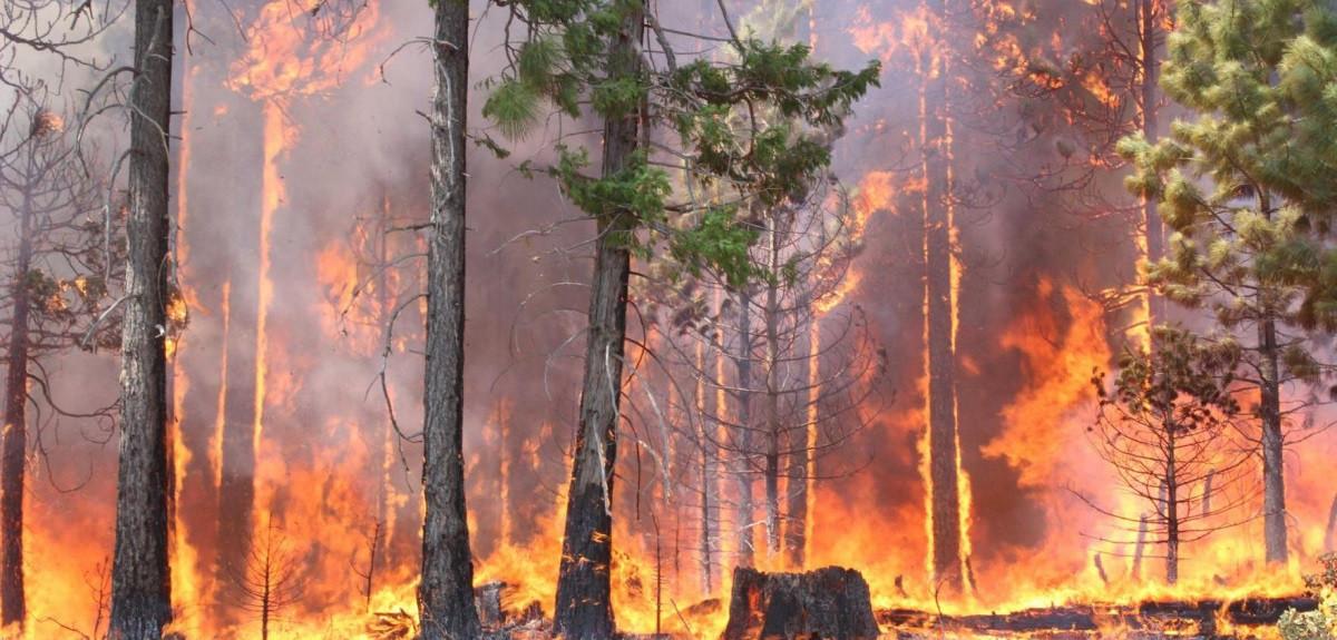 fuego_forestal_1200x575